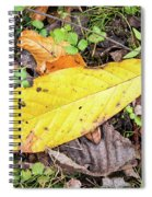 Paw Paw Leaf Fall Colors Spiral Notebook
