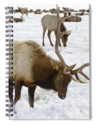 Pawing For Food Spiral Notebook