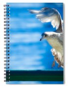Peace Gull Spiral Notebook