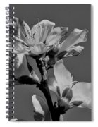 Peach Blossoms In Grayscale Spiral Notebook