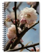 Peach Blossoms In Spring Spiral Notebook