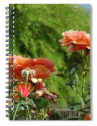 Peach Colored Beauties Spiral Notebook