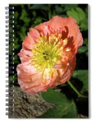 Peach Colored Poppy Spiral Notebook
