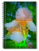 Peach Curtsey Spiral Notebook