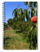 Peach Grove Spiral Notebook