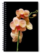 Peach Orchids Spiral Notebook