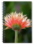 Peach Perfection Spiral Notebook