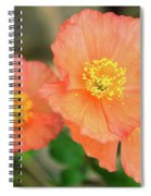 Peach Poppies Spiral Notebook