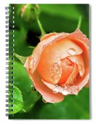 Peach Rose In The Rain Spiral Notebook