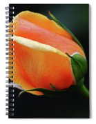 Peach Splendour Spiral Notebook