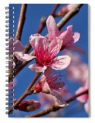 Peach Tree Blossoms Spiral Notebook