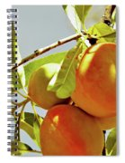Peaches On The Tree Spiral Notebook