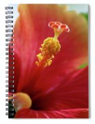 Peachy Hibiscus Spiral Notebook