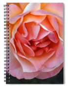 Peachy Rose Spiral Notebook