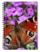 Peacock Butterfly Spiral Notebook