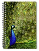 Peacock At Frankenmuth Michigan Spiral Notebook