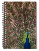 Peacock At The Fort Spiral Notebook