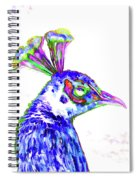Peacock Closeup Spiral Notebook