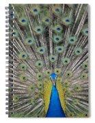 Peacock Display Spiral Notebook