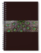 Peacock Feathers Upside Down Spiral Notebook