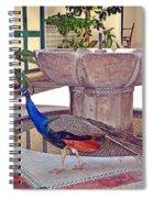 Peacock - Havana Cuba Spiral Notebook