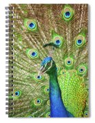 Peacock Showing Off Spiral Notebook