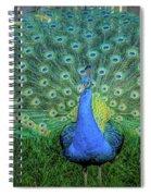 Peacock1 Spiral Notebook