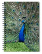 Peacocks Glory Spiral Notebook