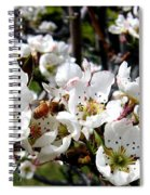 Pear Blossoms And Bee Spiral Notebook