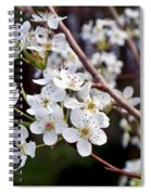 Pear Tree Blossoms IIi Spiral Notebook