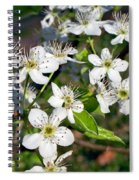 Pear Tree Blossoms Iv Spiral Notebook