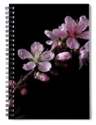 Peach Tree Blossum Spiral Notebook