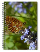 Pearl-bordered Fritillary Spiral Notebook
