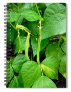 Peas Growing On The Farm 1 Spiral Notebook