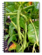 Peas Growing On The Farm 4 Spiral Notebook