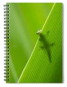 Peek A Boo Gecko Spiral Notebook