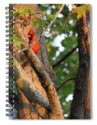 Peek-aboo Spiral Notebook