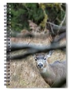 Peekaboo Spiral Notebook