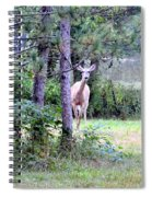 Peekaboo Deer Spiral Notebook