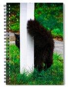 Peeking Kitty Spiral Notebook