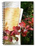 Peeling Bark Of White Birch Tree Spiral Notebook