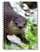 Peering Otter Spiral Notebook