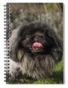 Pekingese Dog Spiral Notebook