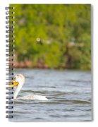 Pelican Drifting Along Spiral Notebook
