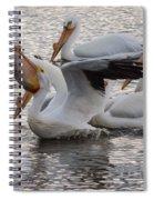 Pelican Having Supper Spiral Notebook