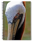 Pelican Head Spiral Notebook