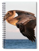 Pelican In Flight At Sunset Spiral Notebook