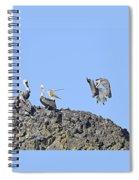Pelican Landing On A Rock Spiral Notebook