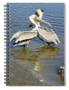 Pelican Love Spiral Notebook