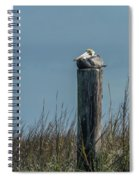 Pelican On A Piling Spiral Notebook